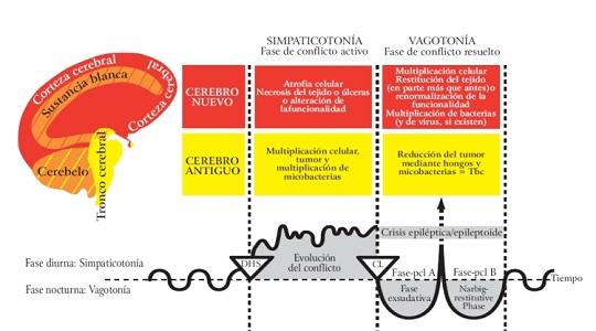 Fases de la enfermedad según el Dr. Hamer